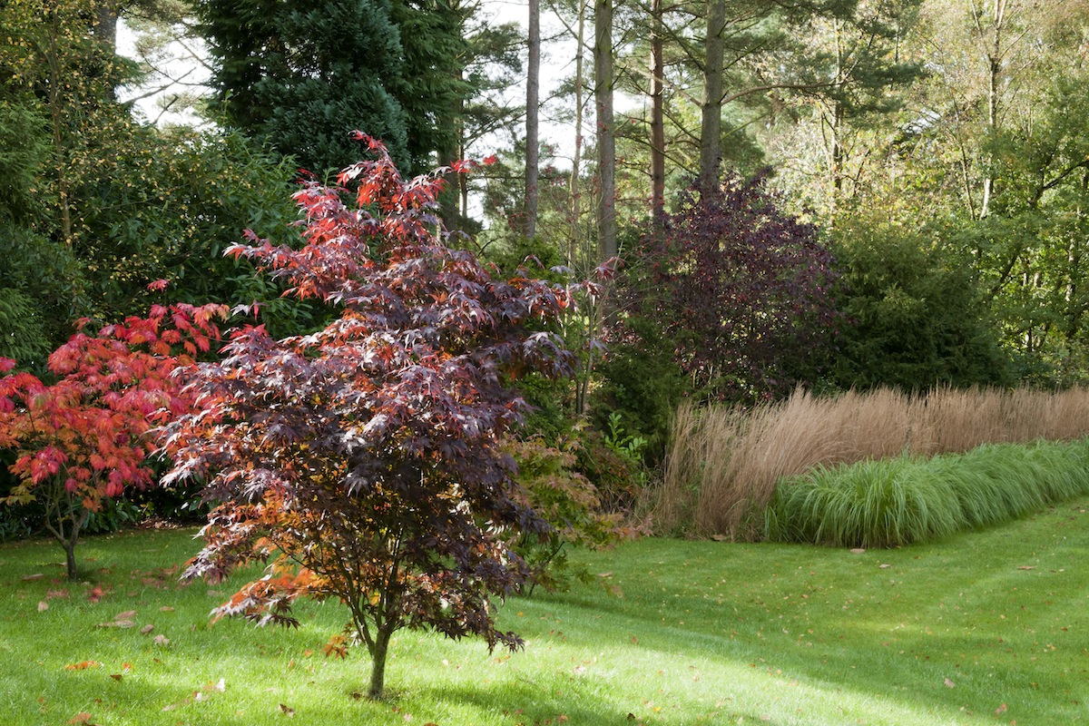 Hampshire Garden | Projects | Iona Hilleary Landscape Design & Gardening